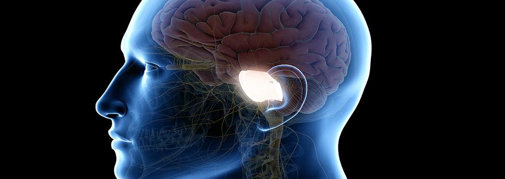 Limbisches System im Gehirn