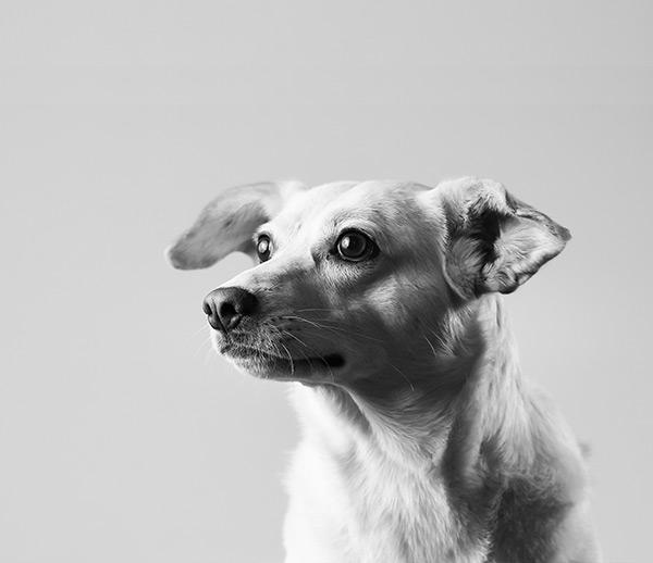 Ida Hund