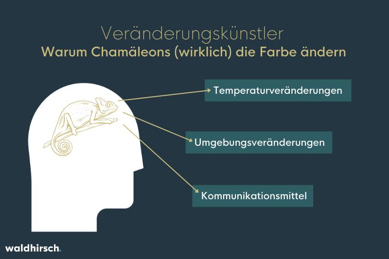 Grafik zur Farbveränderung von Chamäleons